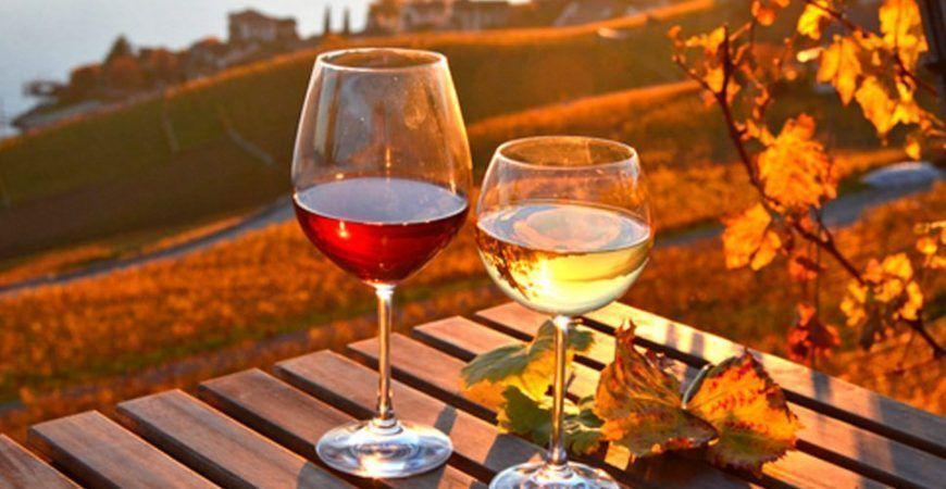 Cata de vinos en Lanzarote