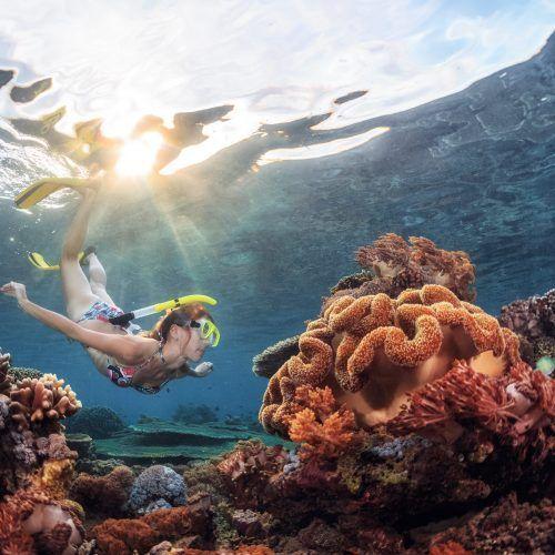 Haz Snorkel en aguas cristalinas